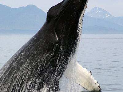 The Taz Whale Watching Tours